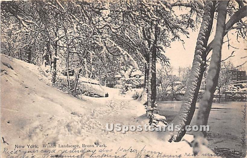 Winter - Bronx Park, New York NY Postcard