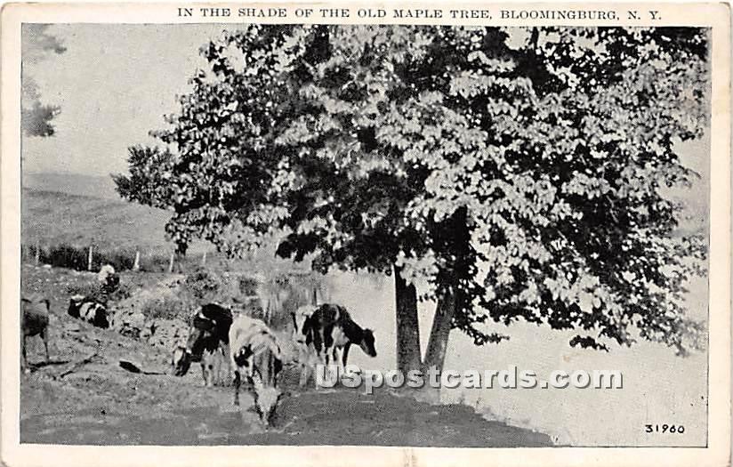 Shade of the Old Maple Tree - Bloomingburg, New York NY Postcard