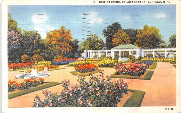 Rose Gardens Buffalo, New York Postcard