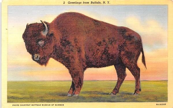 Buffalo New York Postcard
