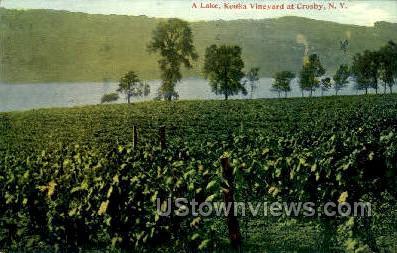 Keuka Vineyard - Crosby, New York NY Postcard