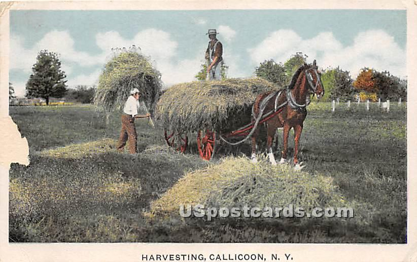 Harvesting - Callicoon, New York NY Postcard