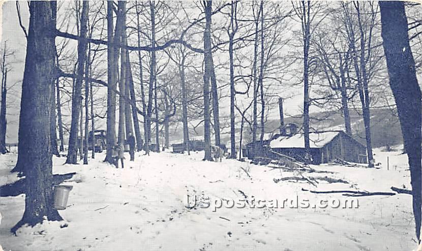 Cortland County Sugar Busch - New York NY Postcard
