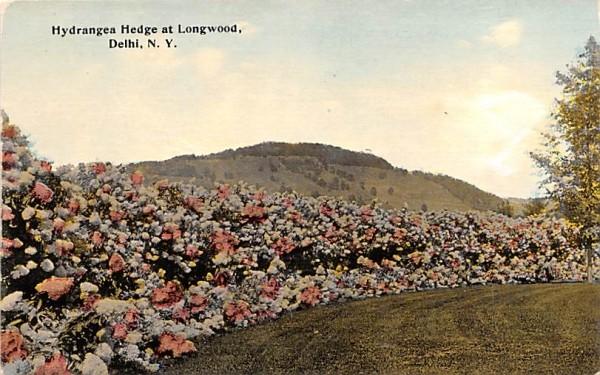 Hydrangea Hedge & Longwood Delhi, New York Postcard