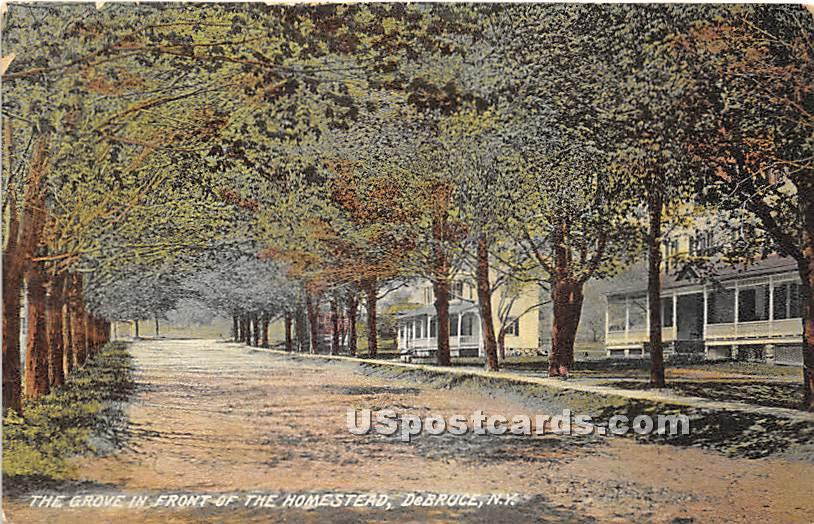 The Grove in Front of the Homestead - De Bruce, New York NY Postcard