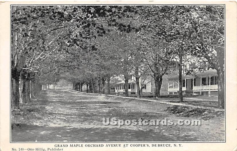 Grand Maple Orchard Avenue - De Bruce, New York NY Postcard