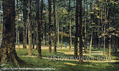 Maple Sugar Grove - Ferndale, New York NY Postcard