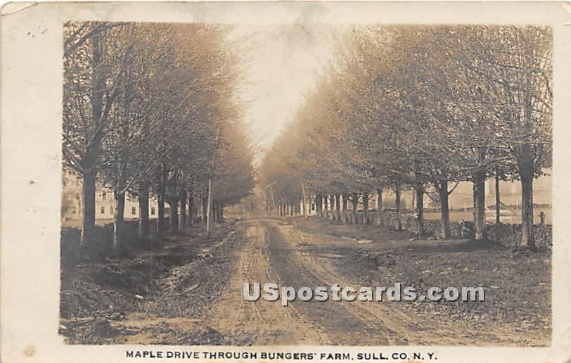 Maple Drive through Bunger's Farm - Ferndale, New York NY Postcard