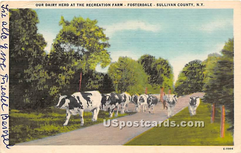 Our Dairy Herd at Recreation Farm - Fosterdale, New York NY Postcard