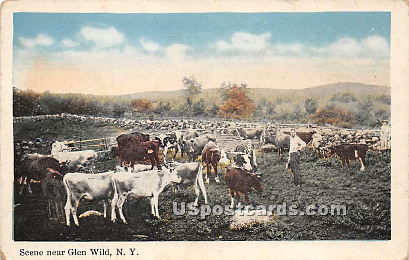 Livestock Scene - Glen Wild, New York NY Postcard
