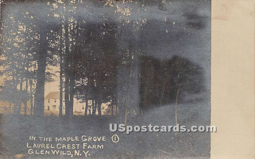 Maple Grove - Glen Wild, New York NY Postcard