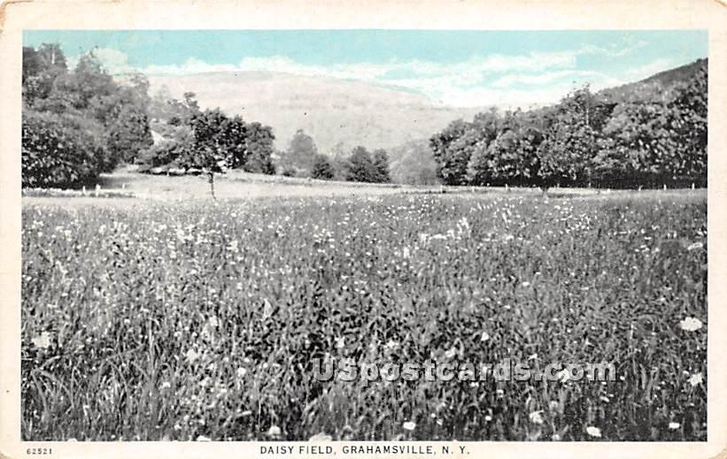 Daisy Field - Grahamsville, New York NY Postcard