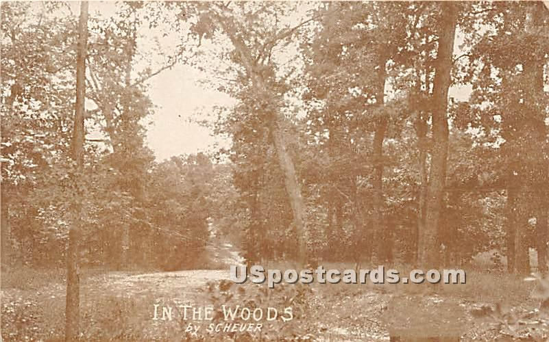 In The Woods - Hasbrouck, New York NY Postcard