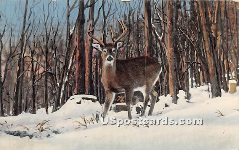 Deer - Highland Lake (Venoge, New York NY Postcard