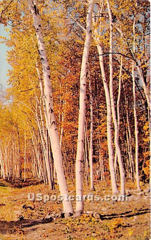 Tree Scene - Hurleyville, New York NY Postcard