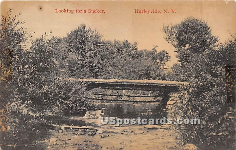 Looking for a Sucker - Hurleyville, New York NY Postcard