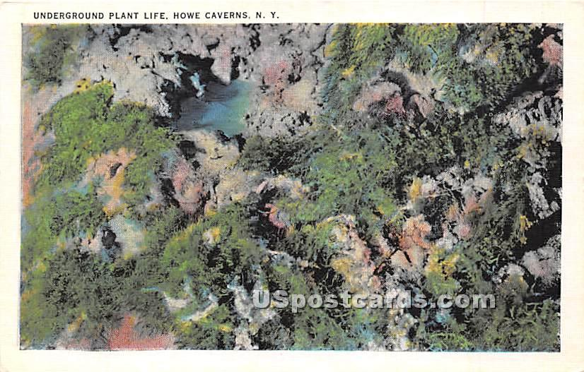 Underground Plant Life - Howe Caverns, New York NY Postcard