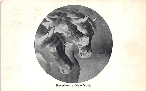 Horses Horseheads, New York Postcard