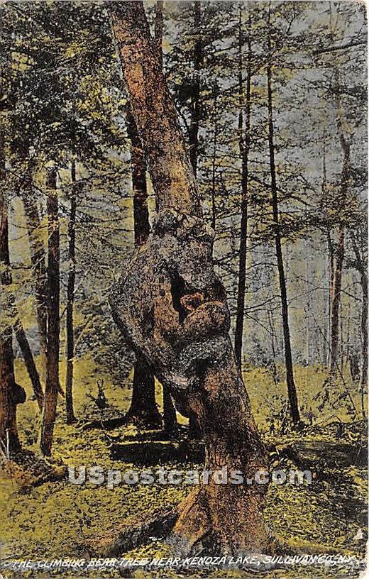 Climbing Bear Tree - Kenoza Lake, New York NY Postcard