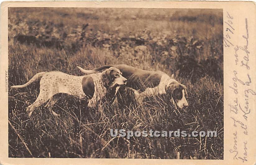 Dogs - Kenoza Lake, New York NY Postcard