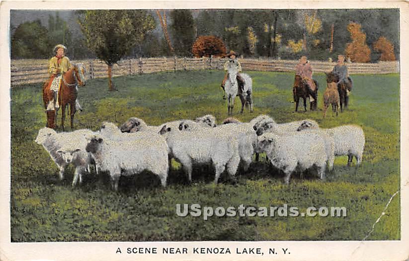 Sheep - Kenoza Lake, New York NY Postcard