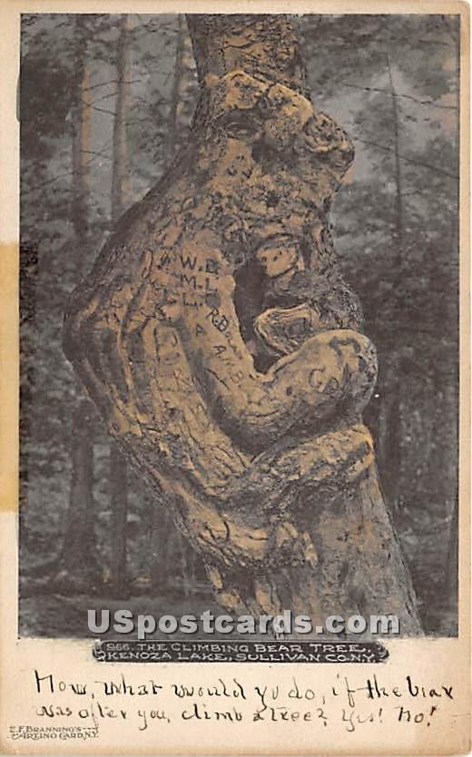Climbing Bear Tree - Kenoza Lake, New York NY Postcard