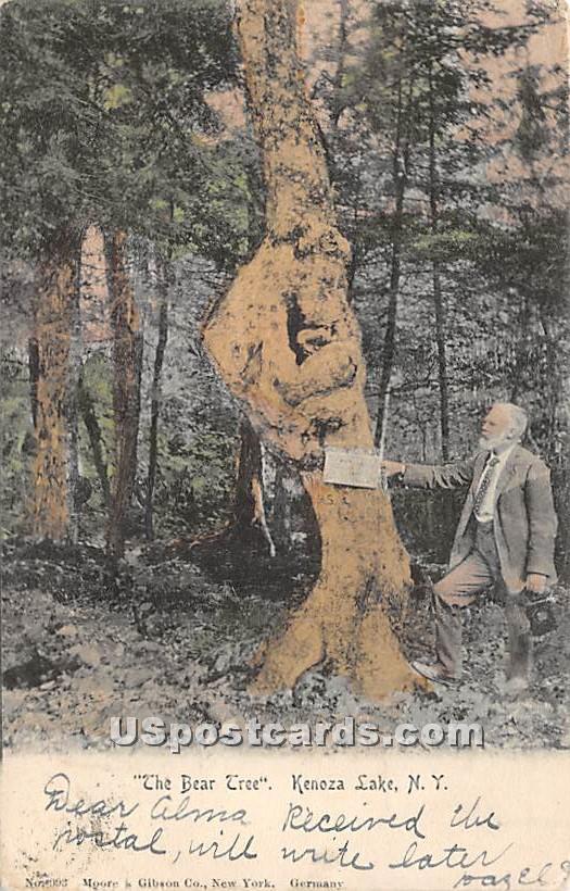The Bear Tree - Kenoza Lake, New York NY Postcard