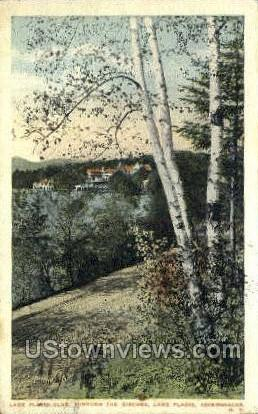 Birches - Lake Placid, New York NY Postcard