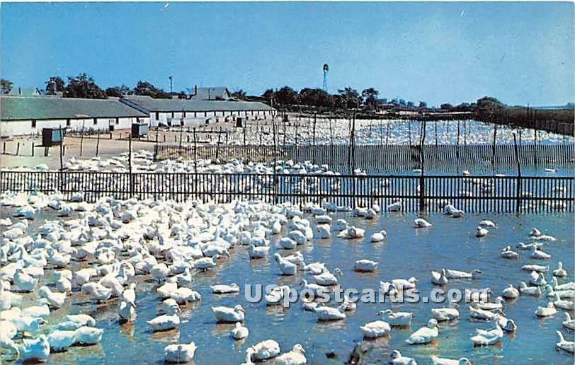 Long Island Ducks - New York NY Postcard