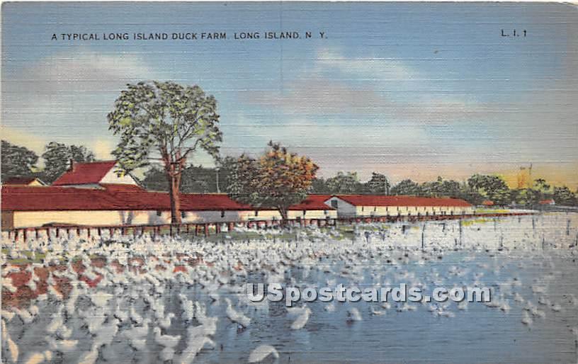 Long Island Duck Farm - New York NY Postcard