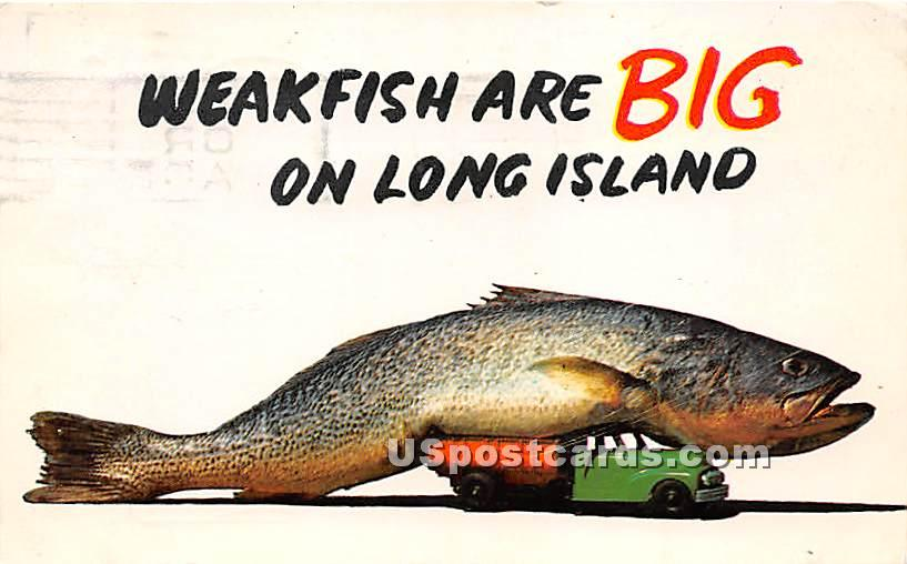 Big Fish - Long Island, New York NY Postcard