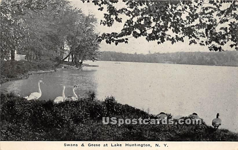 Swans & Geese - Lake Huntington, New York NY Postcard