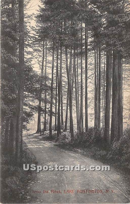Throu the Pines - Lake Huntington, New York NY Postcard