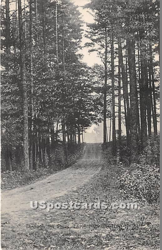 Through the Pines - Lake Huntington, New York NY Postcard