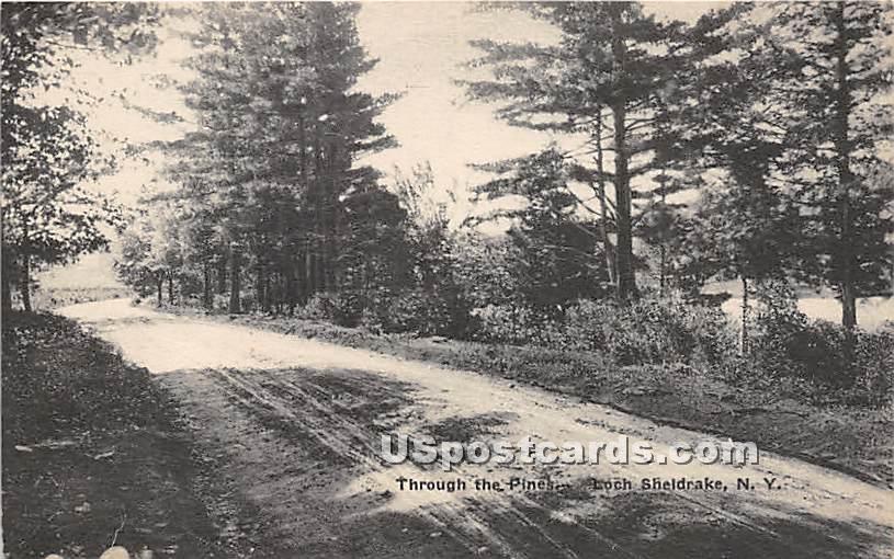 Through the Pines - Loch Sheldrake, New York NY Postcard