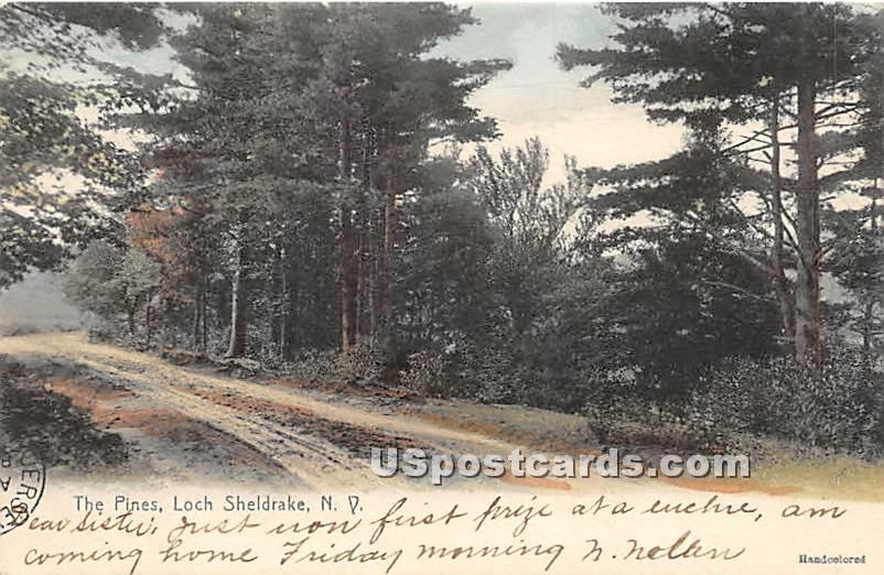 The Pines - Loch Sheldrake, New York NY Postcard