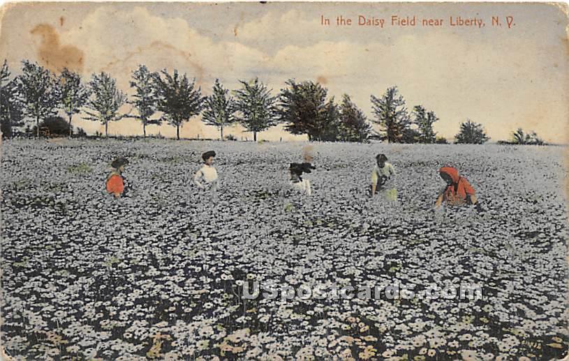 Daisy Field - Liberty, New York NY Postcard