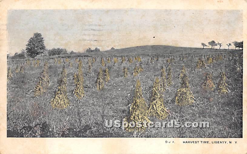 Harvest Time - Liberty, New York NY Postcard