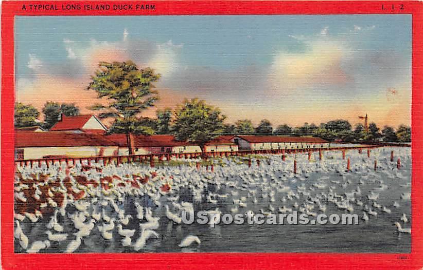 Duck Farm - Long Island, New York NY Postcard