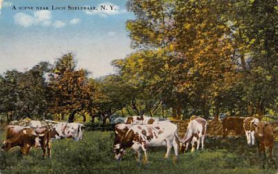 A sceen Near Loch Sheldrake, New York Postcard