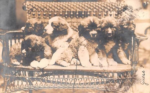 Puppies Middletown, New York Postcard