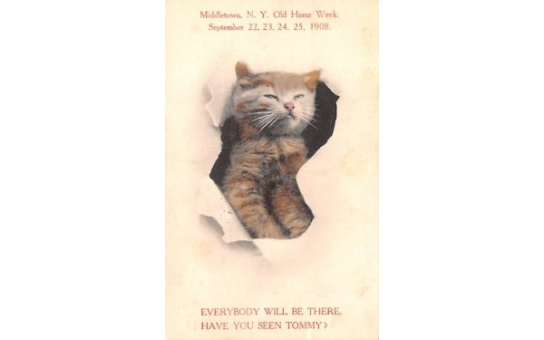 Have you seen Tommy Middletown, New York Postcard