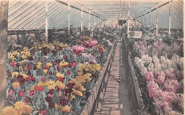 Florist Middletown, New York Postcard