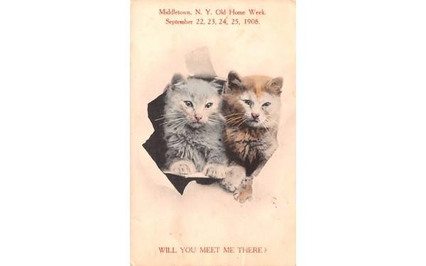 Meet Me Middletown, New York Postcard