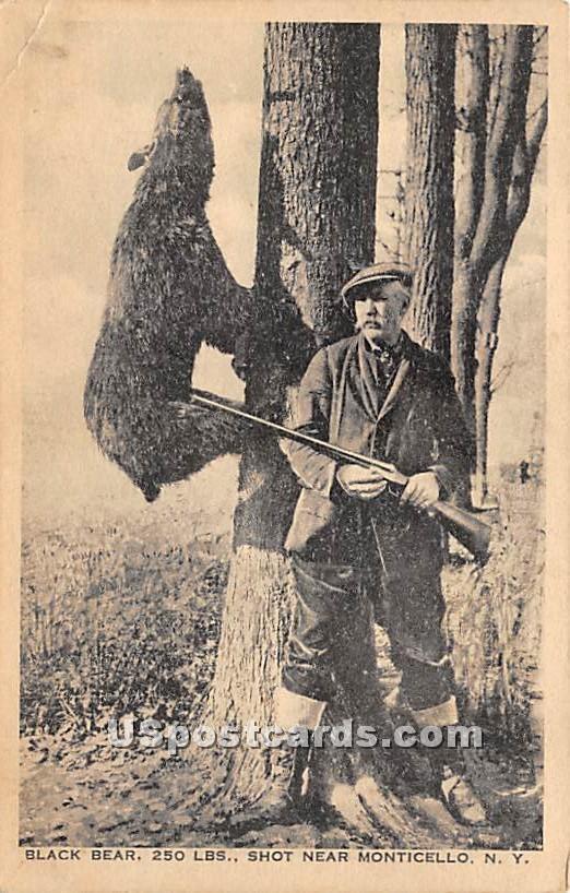 Black Bear Shot - Monticello, New York NY Postcard
