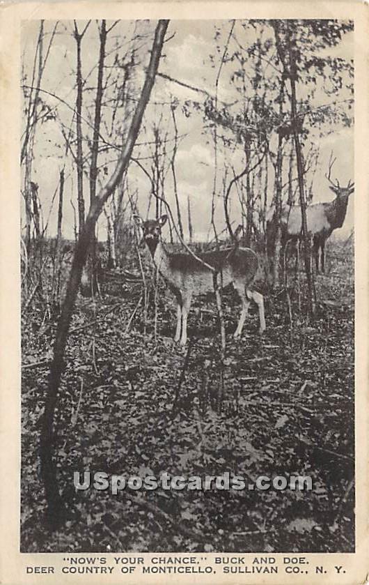 Buck and Doe - Monticello, New York NY Postcard