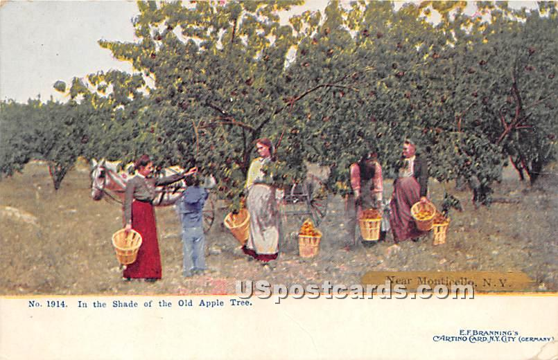 In the Shade of the Old Apple Tree - Monticello, New York NY Postcard