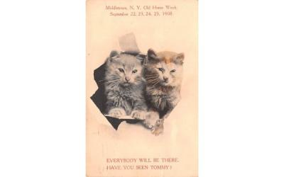 Cats Middletown, New York Postcard