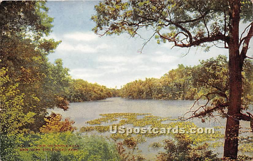 Bronx Lake, New York Zoological Park - New York City Postcards Postcard
