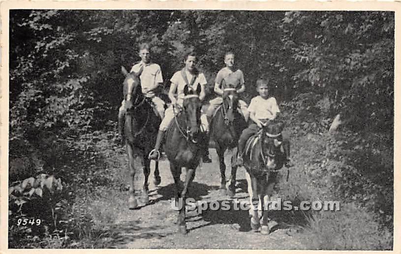 Horseback Riding - Narrowsburg, New York NY Postcard